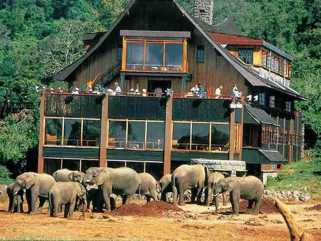 肯尼亚 酒店 动物
