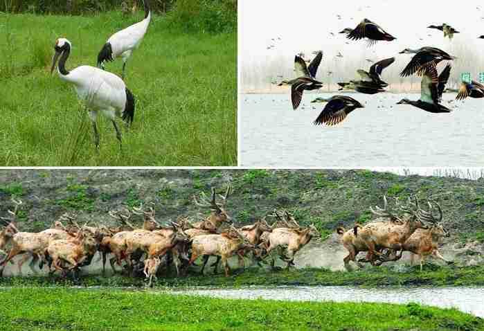 溱湖湿地公园保护动物