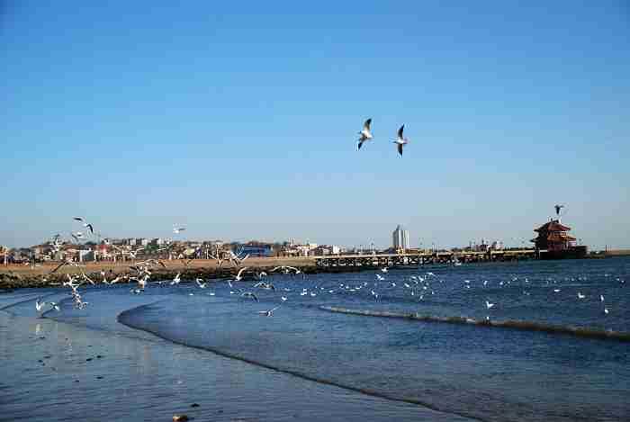 前海东沿社区风景