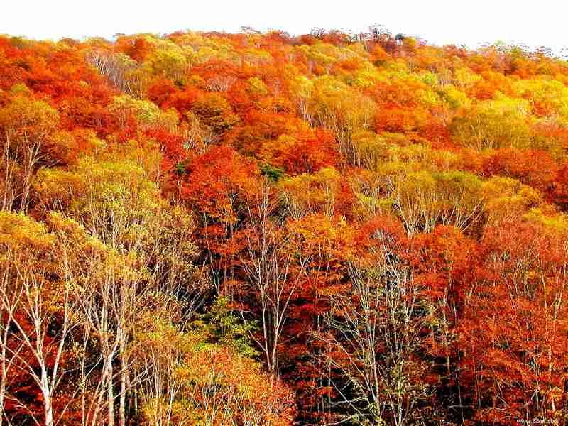 秋季旅游海报高清素材
