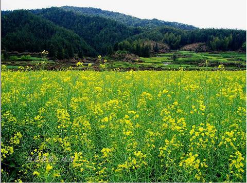 延村旅游攻略 10月延村旅游线路报价 延村旅游景点