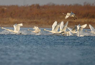 黄河故道湿地自然保护区旅游攻略 10月黄河故道湿地自然保...