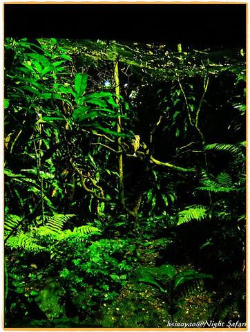 您可在新加坡夜间野生动物园里与独角犀做面对面的接触,倾听远处条纹