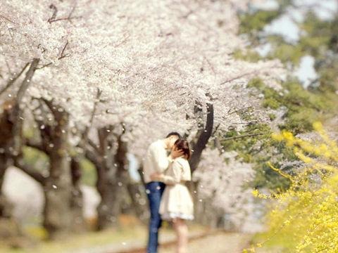 <鼋头渚赏樱-蠡园-灵山大佛2日游>宿五星,和TA一起去看sakura